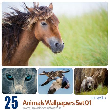Animals Wallpapers Set 01 مجموعه اول از تصاویر حیوانات