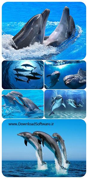 دانلود تصاویر والپیپر دلفین ها ۳۰ Dolphins Wallpaper pack