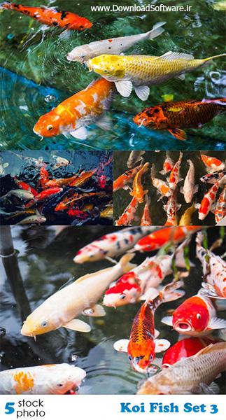 دانلود تصاویر ماهی های زیبا Koi Fish Set 3