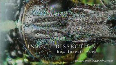 دانلود مستند حشرات Insect Dissection: How Insects Work 2013