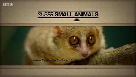 دانلود مستند Super Small Animals 2017