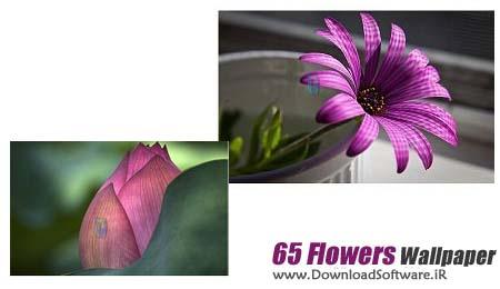 مجموعه فوق العاده زیبا و دیدنی ۶۵ والپیپر با کیفیت بالا از گل های دیدنی
