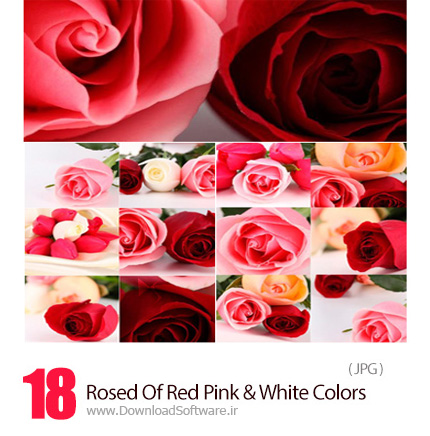 Rosed-Of-Red-Pink-And-White-Colors-Raster-Graphics