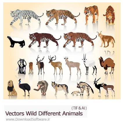 Vectors-Wild-Different-Animals