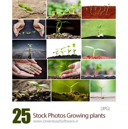 دانلود تصاویر با کیفیت گیاهان در حال رشد - Stock Photos Growing plants