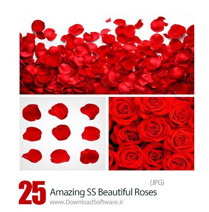 دانلود تصاویر با کیفیت گل و گلبرگ رز از شاتراستوک - Amazing ShutterStock Beautiful Roses