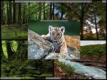 دانلود Endless Slideshow Screensaver - دانلود اسکرین سیور برای ویندوز