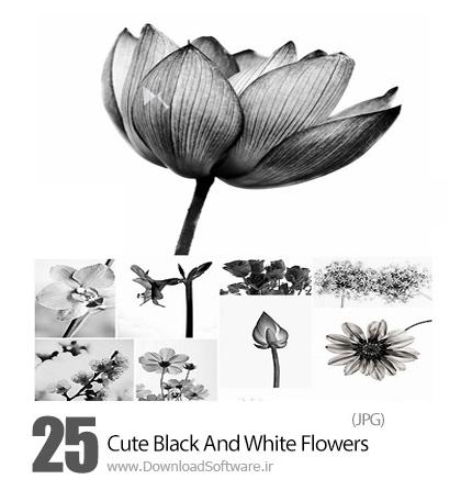 دانلود تصاویر با کیفیت گل های متنوع سیاه و سفید - Cute Black And White Flowers
