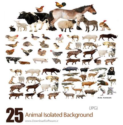 دانلود تصاویر با کیفیت حیوانات اهلی و وحشی، سگ، گربه، گاو، گوسفند، اسب و ... بدون پس زمینه - Animal Isolated Background