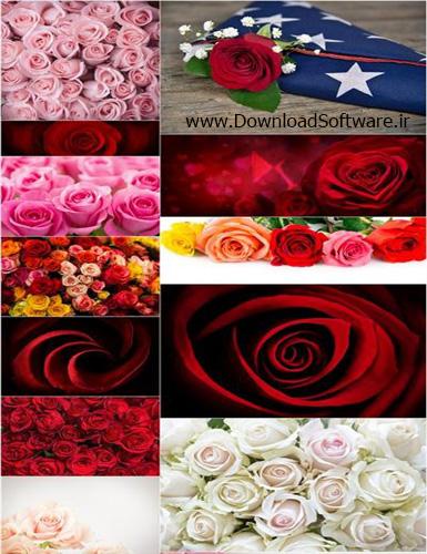 دانلود 20 عکس از گل های رز زیبا با کیفیت بالا