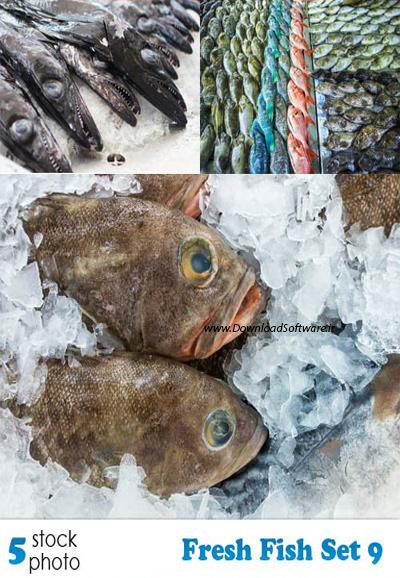 دانلود 5 عکس از ماهی های تازه